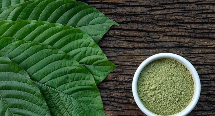 All You Need to Know About Kratom Powder Health and Fitness Weakening  to Know About Kratom Powder All You Need About