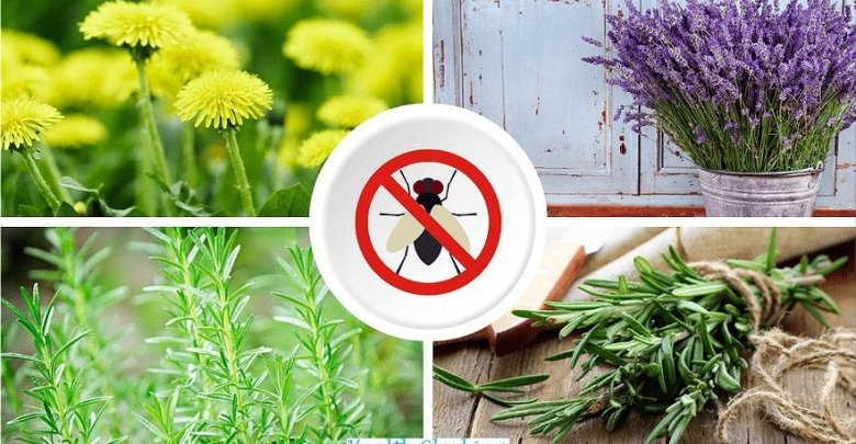 6 Plants That Keep Away From Mosquitoes Health and Wellness  Plants That Keep Away From Mosquitoes It does not always have to be the mosquito net or even the chemical club to effectively keep out mosquitoes