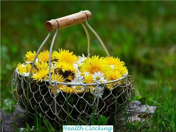 Purifying Spring Cure With Dandelion Health and Wellness Weakening  Spring Cure With Dandelion spring cure spring allergy cure spring allergies natural cure detox cure spring allergies